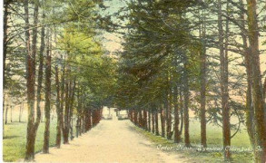 Road leading to The Cedars, now Cedar Avenue in Columbus, GA